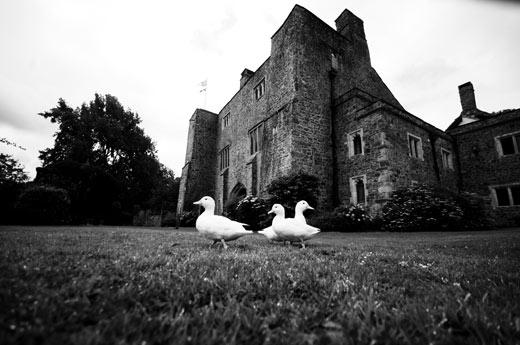 Ducks at Bickleigh