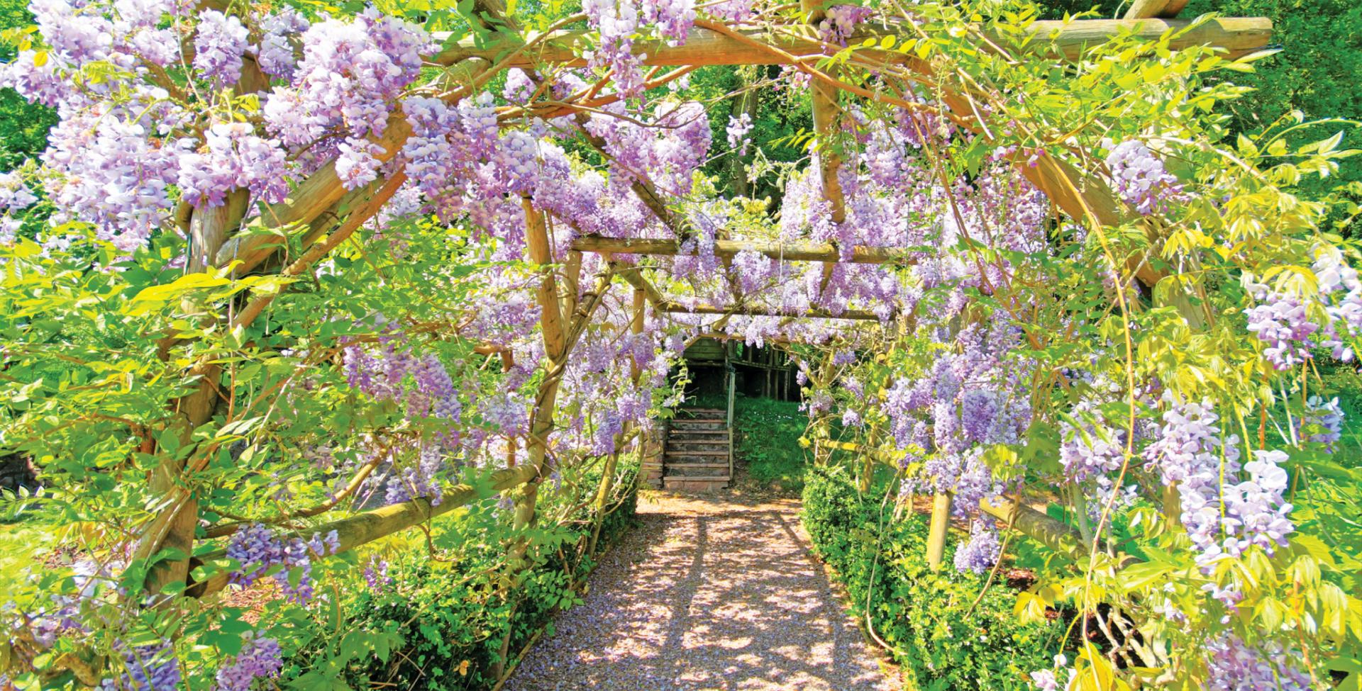 Wedding Garden Walk Way